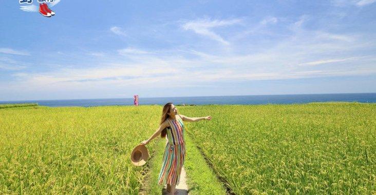 【新社梯田】超夯IG熱點 太平洋左岸的海稻田 @YA !野旅行-玩樂全世界