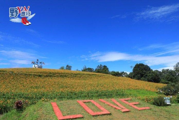 花東縱谷暑假重頭戲 赤科山金針花海迎賓 @YA !野旅行-吃喝玩樂全都錄
