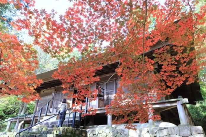 浪漫的季節唯美的情境,丹波篠山楓紅片片 @YA !野旅行-吃喝玩樂全都錄