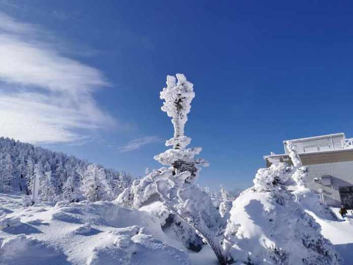 山形藏王雪季限定!藍天的藏王樹冰真是太美了 @YA !野旅行-吃喝玩樂全都錄