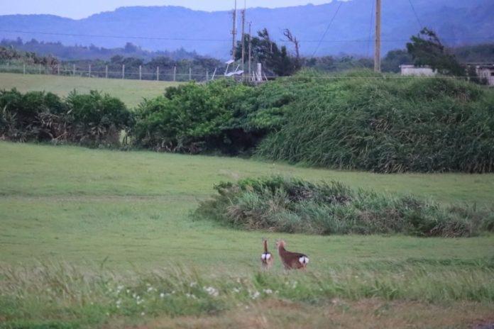 龍磐草原找尋梅花鹿 台26線海岸曠野寄情 @YA !野旅行-玩樂全世界