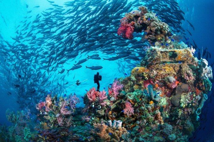 2020菲律賓線上潛水展 世界級夢幻潛水聖地 菲潛不可 @YA 野旅行-陪伴您遨遊四海