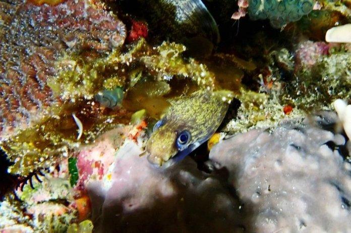 仲夏夜的水下夢幻情境 綠島夜潛拍微距初體驗 @YA 野旅行-陪伴您遨遊四海