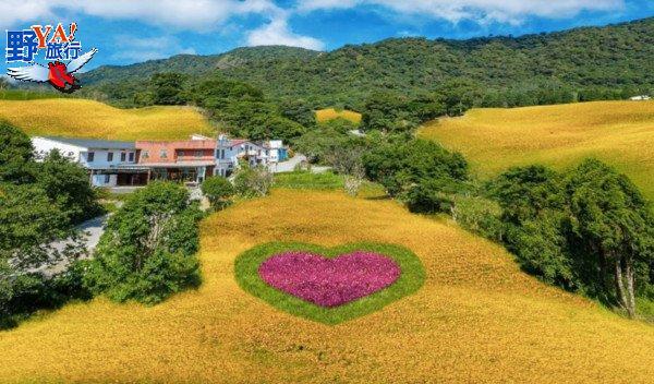 花蓮金針花季8月1日開跑 金針創意美食、螢光動物彩繪登場 @YA !野旅行-玩樂全世界