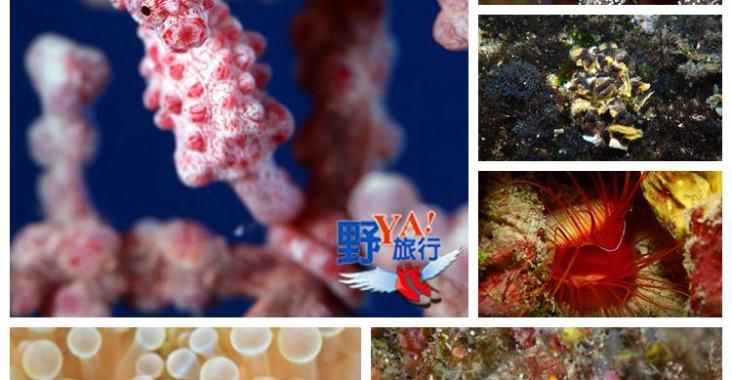 海底忙什麼-東管處東海岸及綠島海域潛點探勘 @YA !野旅行-玩樂全世界