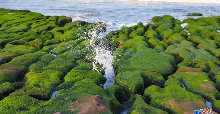 春季限定美景-老梅綠石槽  北觀處結合社區巡守並積極落實「向海致敬」! @YA !野旅行-玩樂全世界