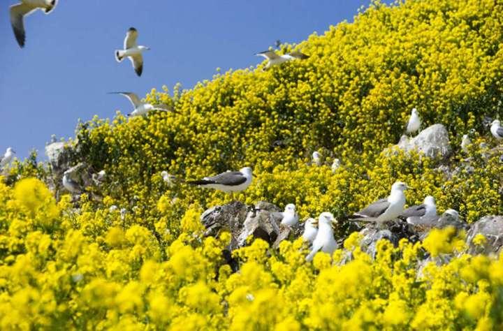 「鷗」耶!八戶幸運之旅 到東北八戶地區走一遭 包你幸運一整年 @YA !野旅行-吃喝玩樂全都錄