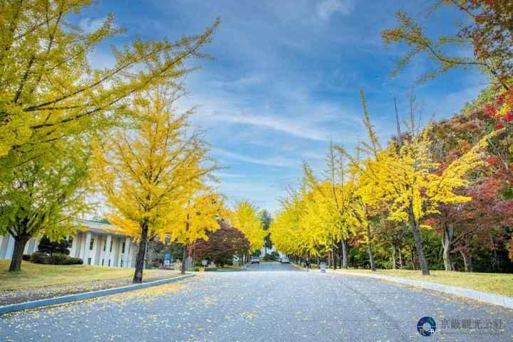 京畿楓葉季帶你備戰解封 一起陷入京畿道的秋天魅力 @YA !野旅行-吃喝玩樂全都錄