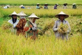 petani dan pnderita katarak