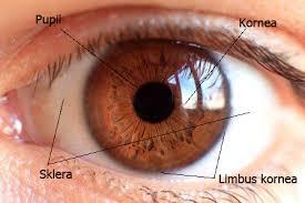 ada apa dengan bola mata kita sebenarnya