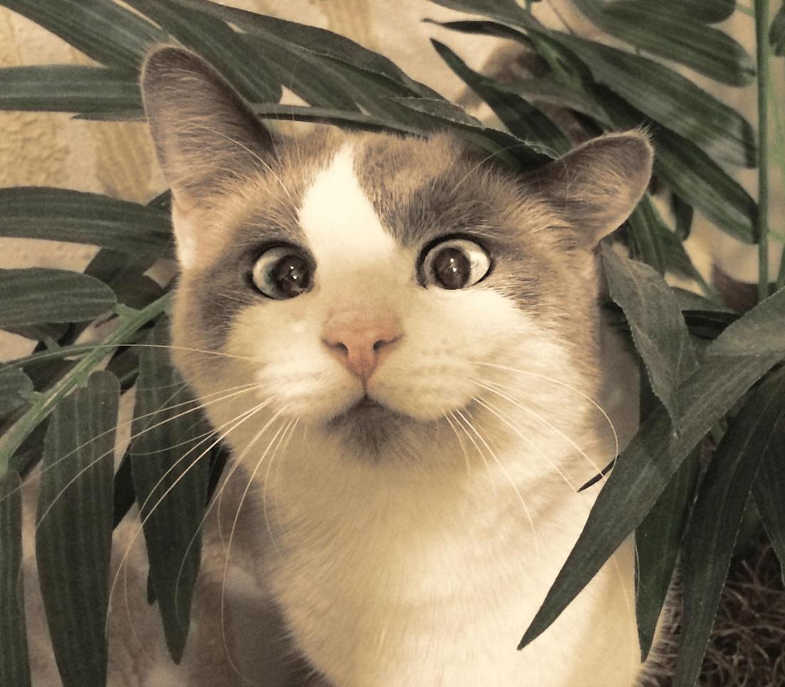 CUTE Derpy Kitty YAYOMG
