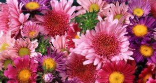 Anneler Yar İmiş - Şehriban Tuğrul (Gökçe Çiçek)