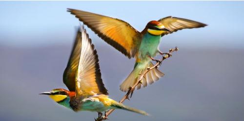 Yaşlı Kuşun Öyküsü  Serdar Hakyemezoğlu