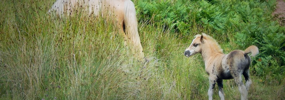 Horses breed in the months with long daylight and give birth about a year later