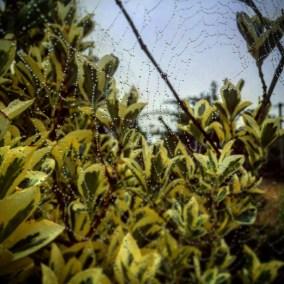 i_spiderweb