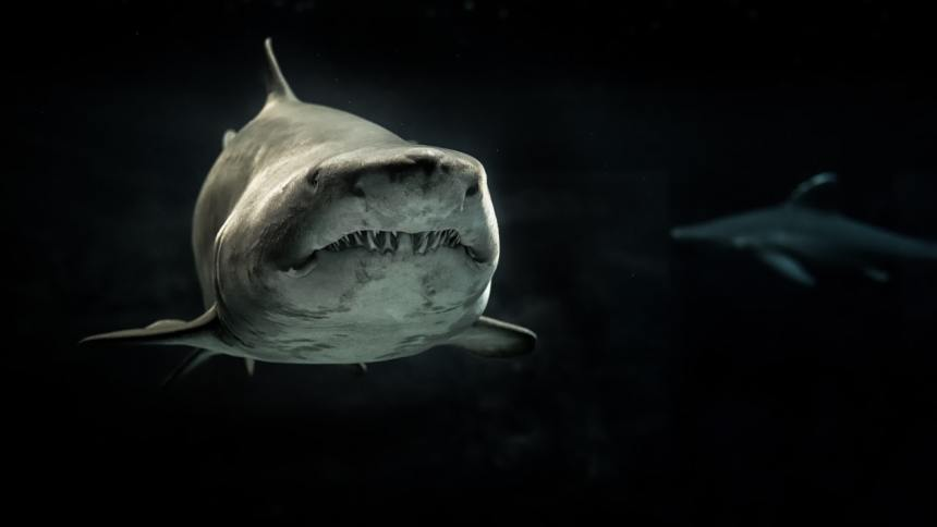 Der Weiße Hai