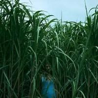Im hohen Gras (2019) - Review