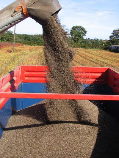Comment choisir un moulin à céréales ?