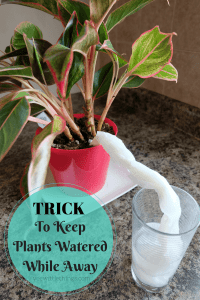 Trick To Keep Plants Watered While Away