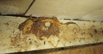 Walthamstow takeaway shut down after inspectors discover 'large scale' vermin infestation