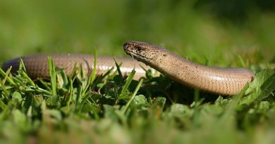 Slow worm friendly housing scheme near Chelmsford gets green light