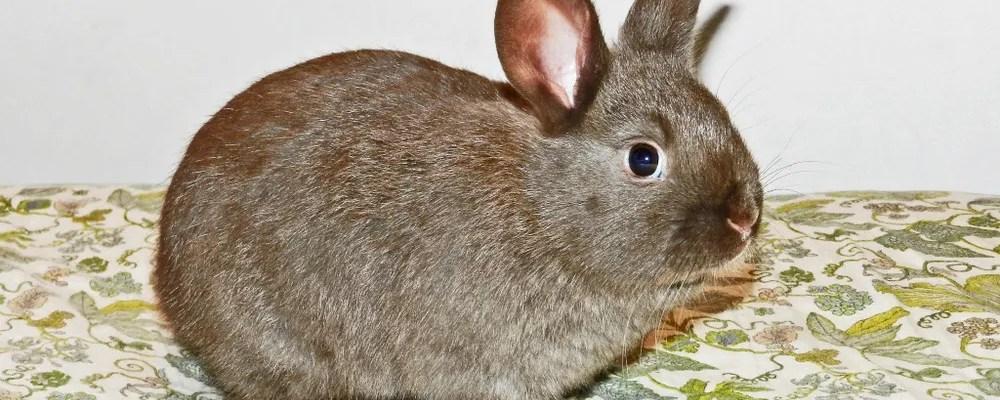 Rabbits- How to Treat Ear Mites- Yellow Birch Hobby Farm