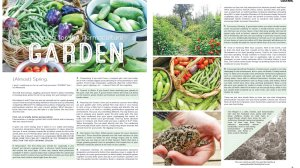 Planning for the Permaculture Garden {Lake Time Magazine Article}