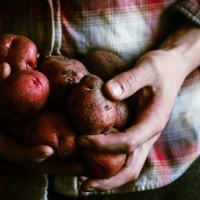 How I Grew 600 Pounds of Potatoes