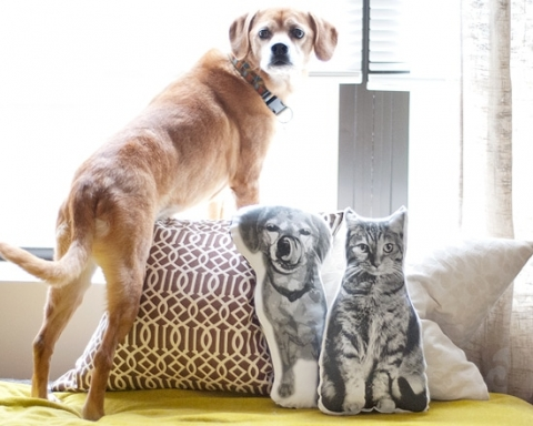 pet pillows or this is what crazy