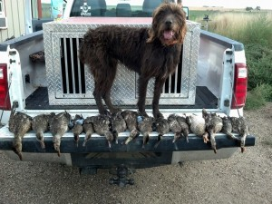 Coopr with a limit of ducks.  Opening Day of Waterfowl 2013.