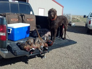 Coopr with the hard won limit on one of his final hunts.