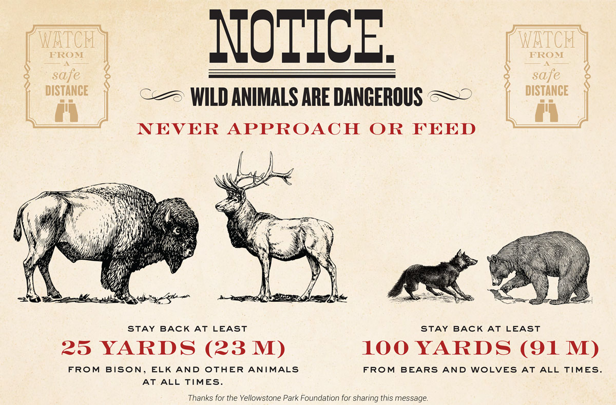 Photographing Yellowstone S Wildlife