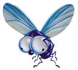 ¿Dónde está la mosca, aquí o aquí?