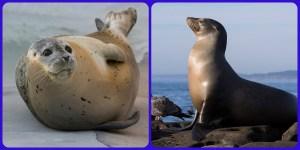 Seal Sea lion