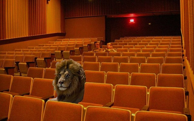 Lion at the movies