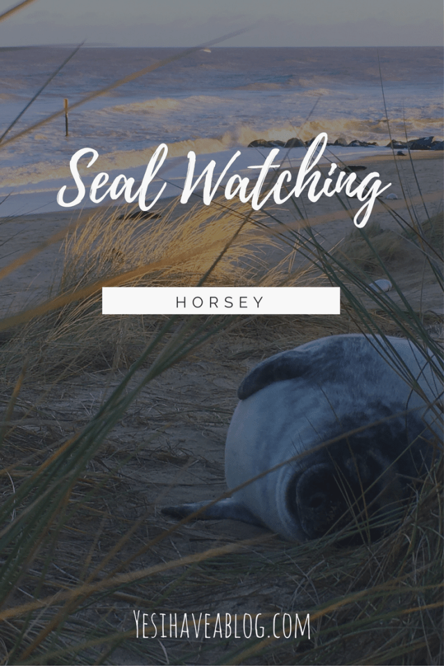 Seal Watching Horsey Beach - Yesihaveablog | Grey Seal Colony Horsey | Life in a Fine City | Winterlust