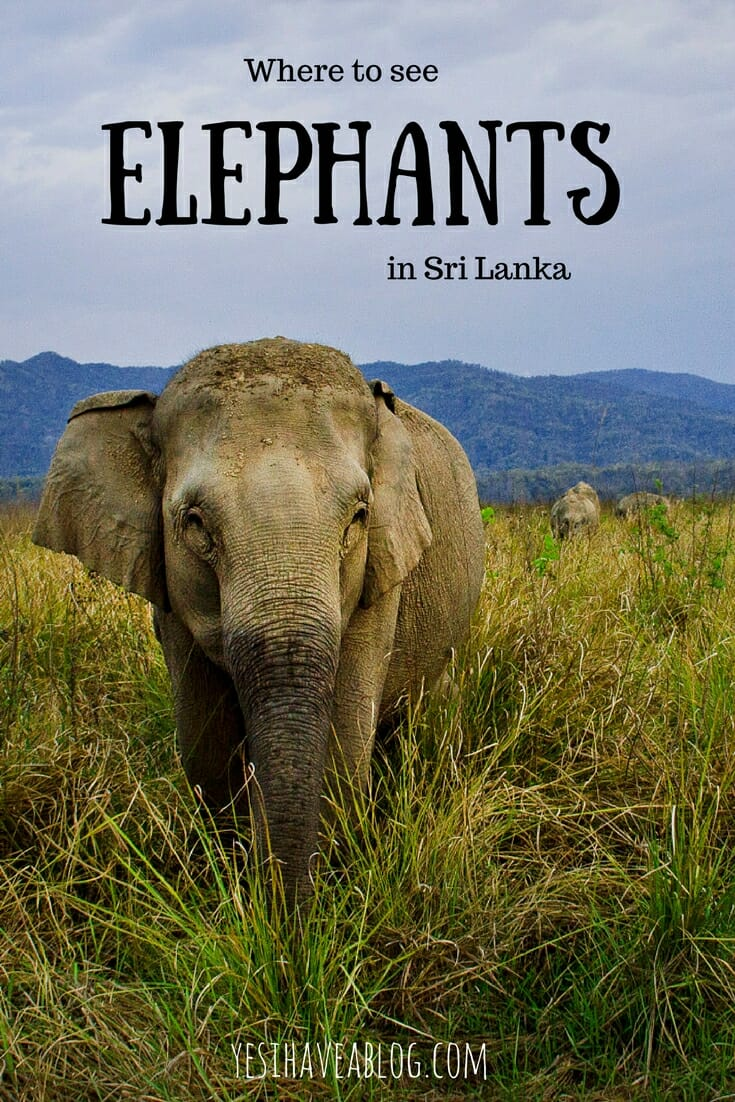 Where to See Elephants in Sri Lanka | Wild Elephants vs Orphanage | Yesihaveablog