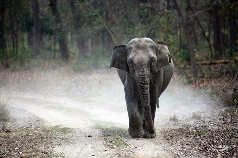 Wild Asian Elephant on dusty track | Where to See Elephants in Sri Lanka | Yesihaveablog