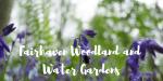 Fairhaven Garden Bluebells