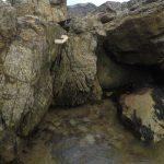 High tide at Kinkell on the Fife coastal path