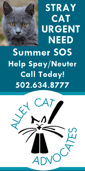 Help spay and neuter stray cats