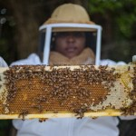 An Unusual Way to Rescue a City From Blight—Bees