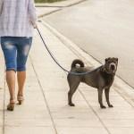 The Surprising Link Between Dogs and Neighborhood Segregation