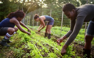 Farm work at Soul Fire Farm. Photo by Capers Rumph.