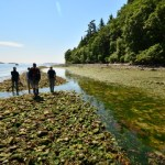 Why Coastal Tribes Are Growing Clam Gardens That Look Like Asian Rice Fields