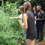 How Artists and Neighbors Turned a Bomb Site Into a Medicine Garden