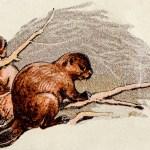 The Creative, Climate-Saving Magic of Beavers