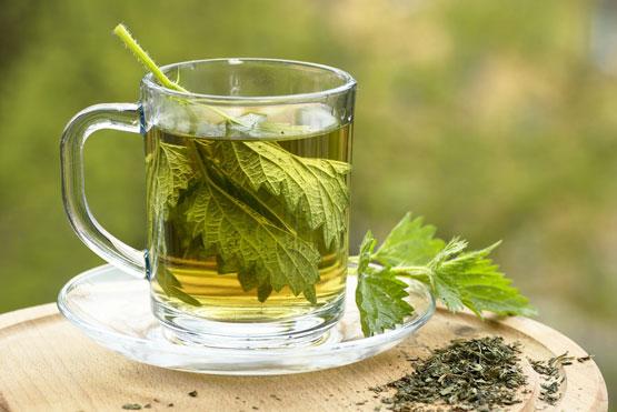 Nettle Tea photo courtesy of Shutterstock