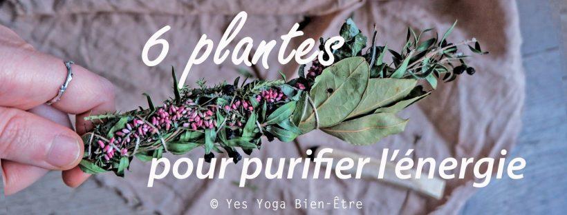 6 plantes pour purifier énergie