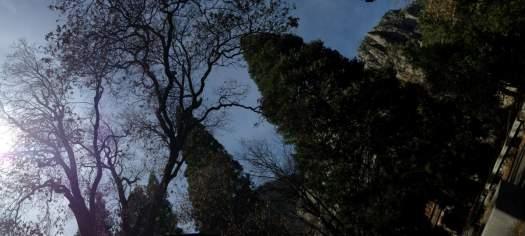 Yosemite-Valley-Oak-Panorama-YExplore-DeGrazio-Mar2014